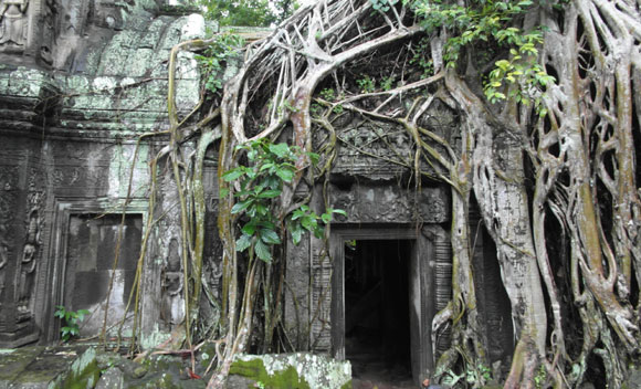 Ta Prohm Temple at Angkor