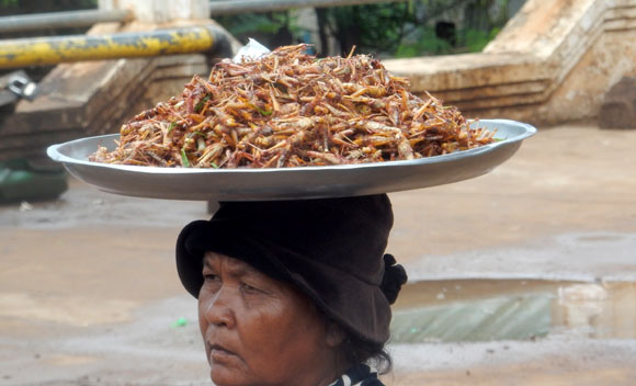 Cooked grasshoppers for sale