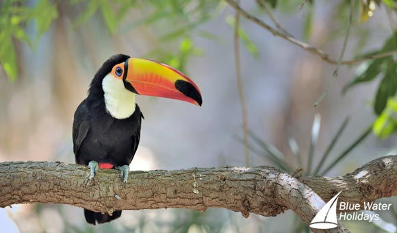 See a variety of wildlife on a festive cruise to Costa Rica