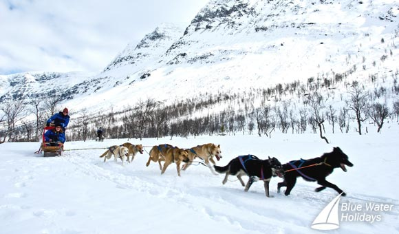 Enjoy dog sledging