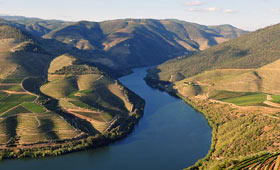 Terraced vineyards on the river Douro