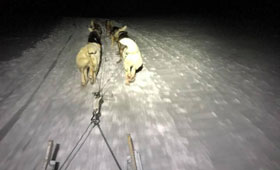 Northern Lights Dog Sledging