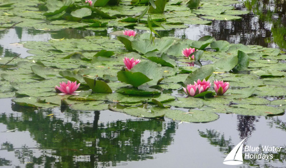The Water Lilies which featured in Monet's paintings