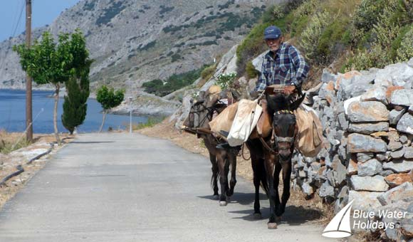 Goods are transported by mules on the island of Hydra