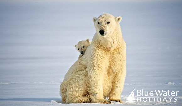 Explore the land of the polar bear on a unique expedition around Spitsbergen