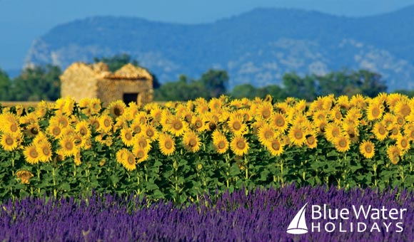 Explore beautiful Provence and the Camargue on a stylish hotel barge cruise