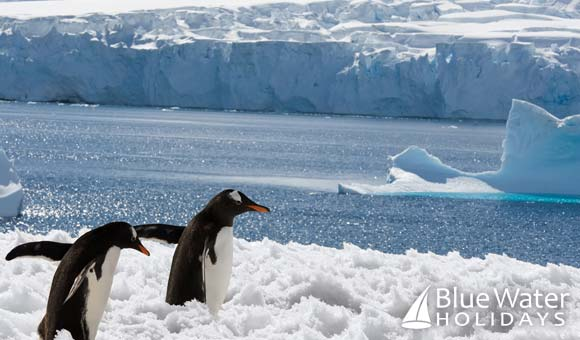 See the amazing wildlife and spectacular scenery of Antarctica