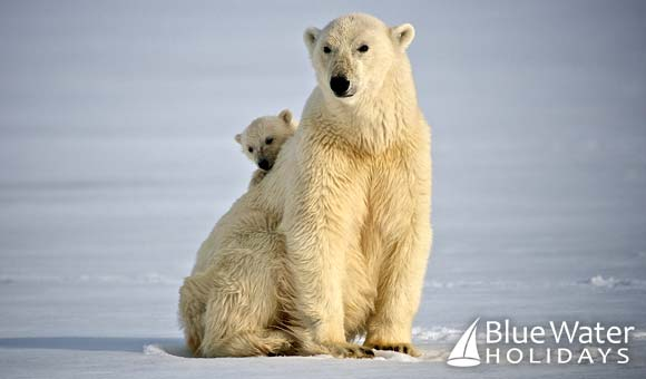Keep an eye out for polar bears on a voyage to Spitsbergen