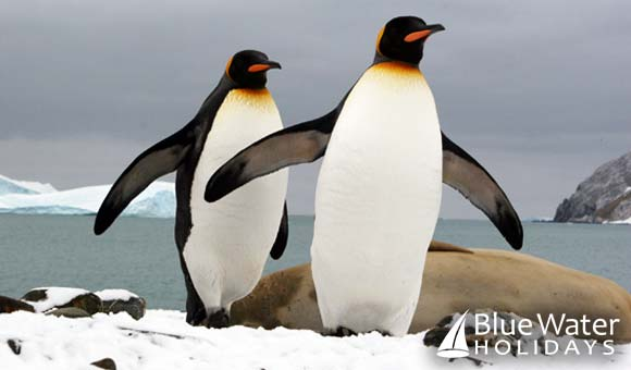 Get up close to penguins on expeditions to Antarctica