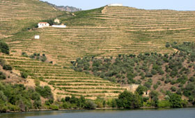 Vineyards along the River Douro